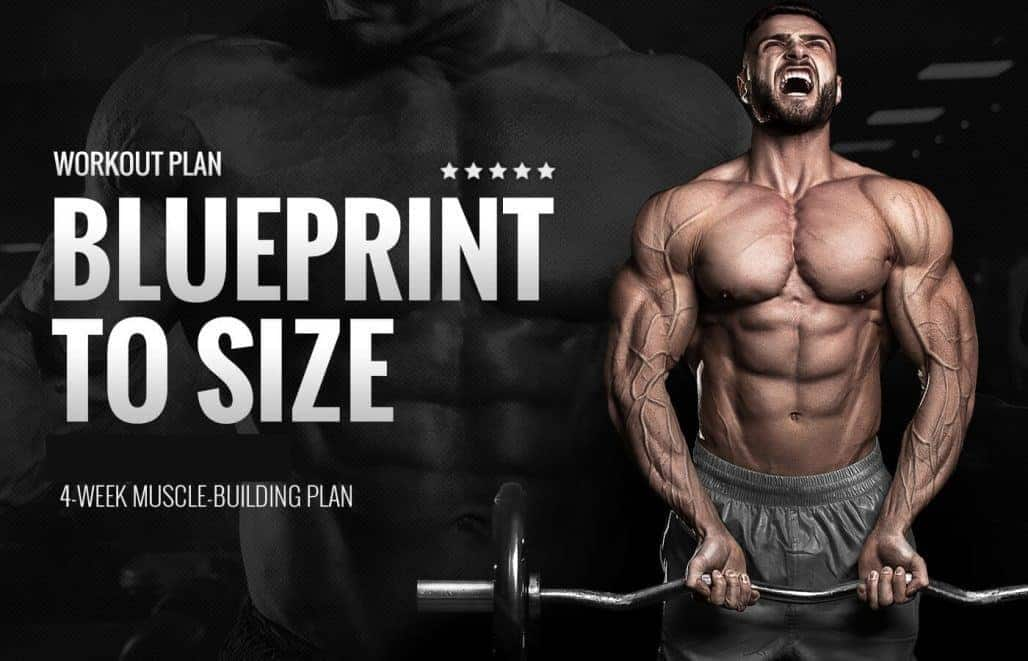 Blueprint to Size