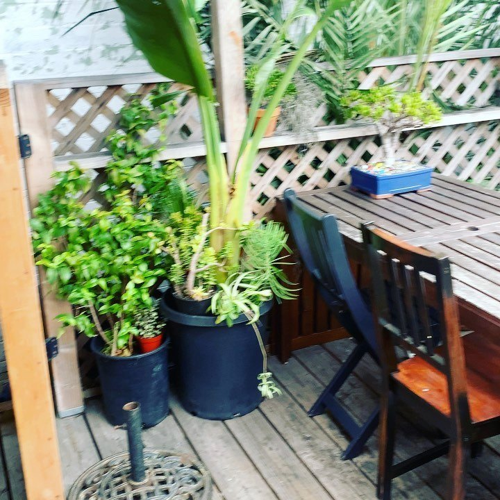 Sweet little outdoor patio calling my name when it's warmer out. Found a new vegan hot spot – funky